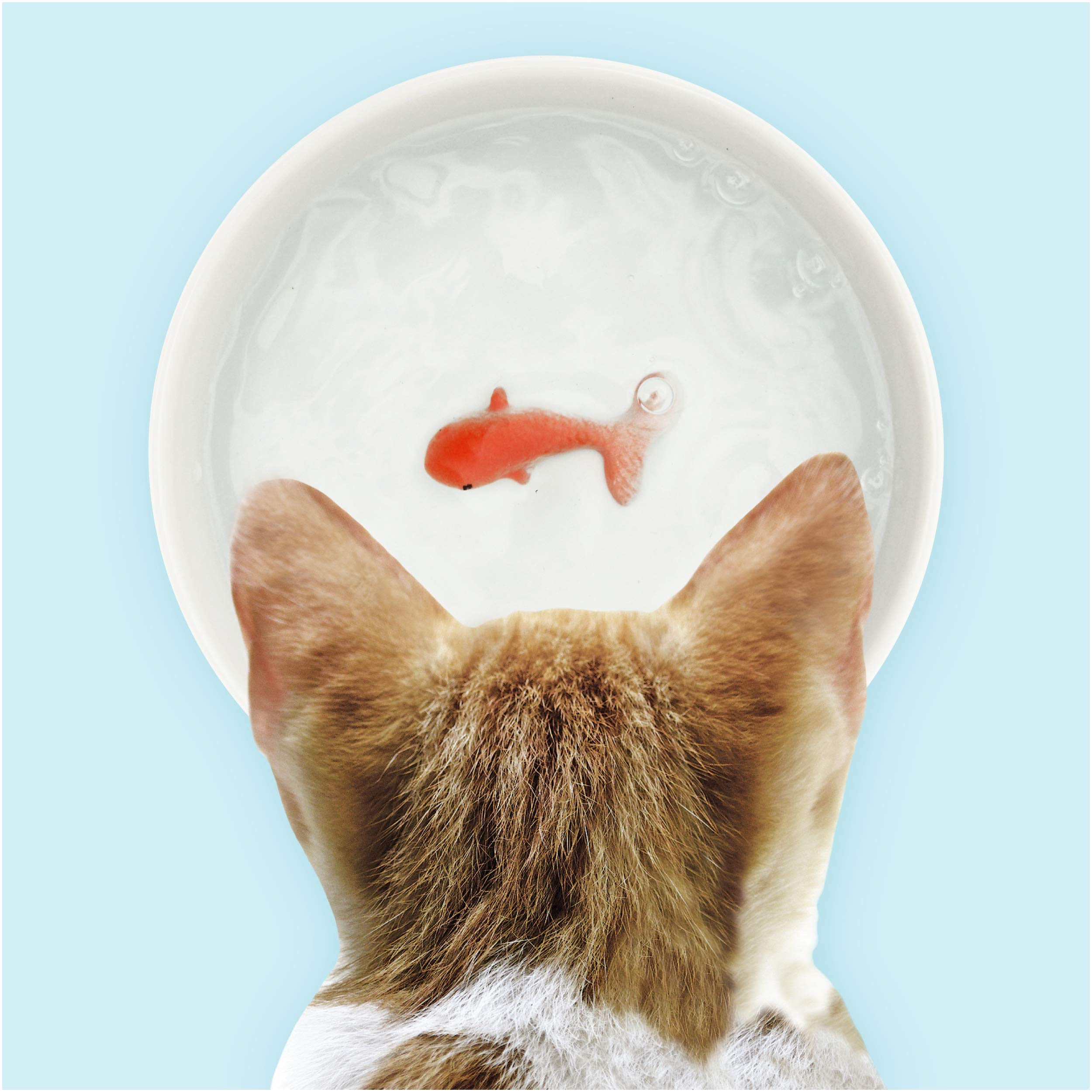 Suck UK Goldfish Dog Or Cat Bowl | Novelty Food & Water Bowl | Cat Food & Dog Food Dish | Ceramic Bowl | Cat Accessories | by Suck UK