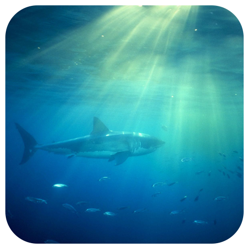 Amazon Shark Live Wallpaper Appstore For Android