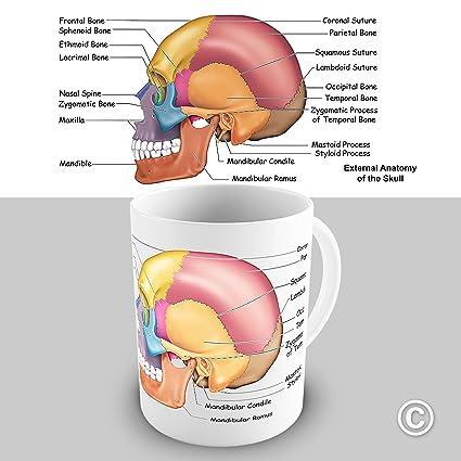 81pIgDfn80L._SX425_ amazon com skull anatomy mug home & kitchen