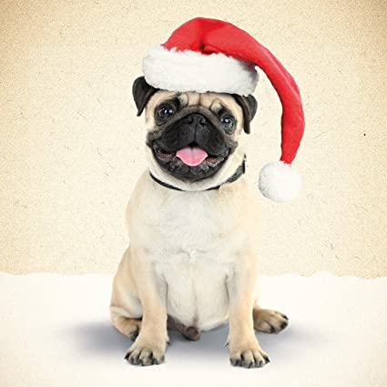 Pug Christmas Cards.Amazon Com Pug In Santa Hat Christmas Card Office Products