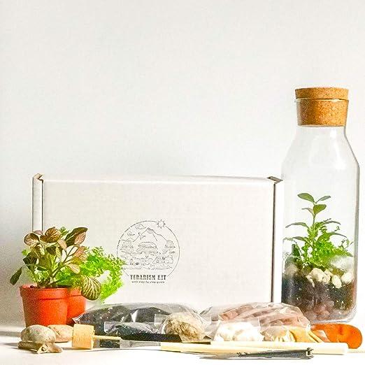 Kit de terrario con contenedor de Vidrio y Tapa de Corcho, Mini ...
