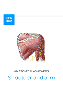 Anatomy flashcards: First look at bones and muscles: Learn all bones ...
