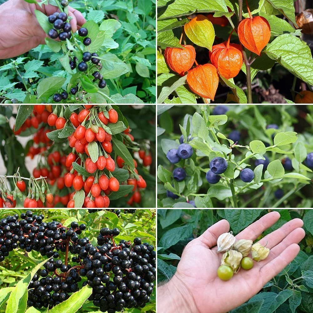 Amazon Com Berry Garden Seed Collection 2 A 6 Variety Pack Of