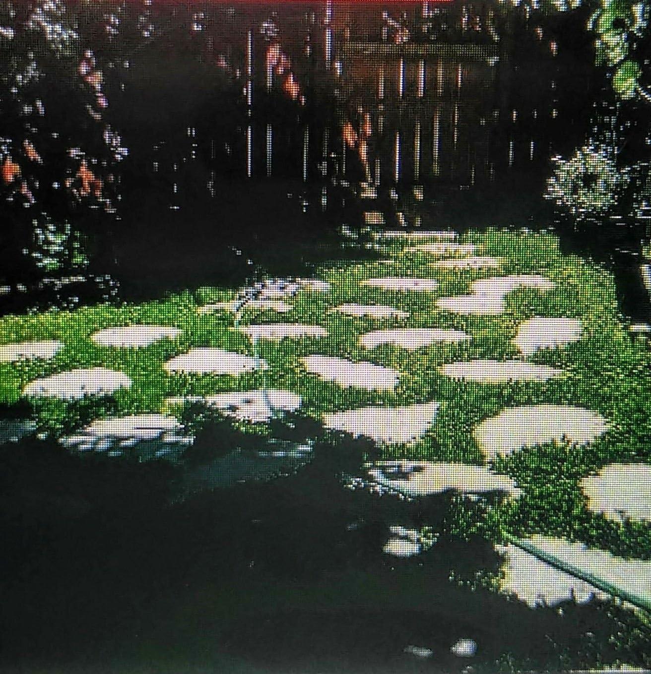 AGROBITS Holandés trébol blanco 250 Semillas Hardy, crece entre adoquines ?? Cabinfevertraders: Amazon.es: Jardín