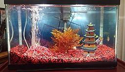 Amazon Com Aqua Culture 10 Gallon Aquarium Starter Kit