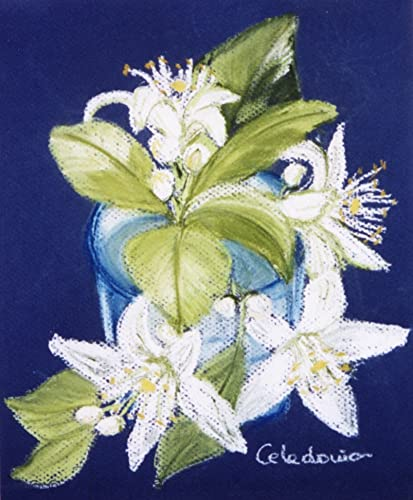 Hand Painted Picture With Cake On Paper Orange Blossom Picture Of