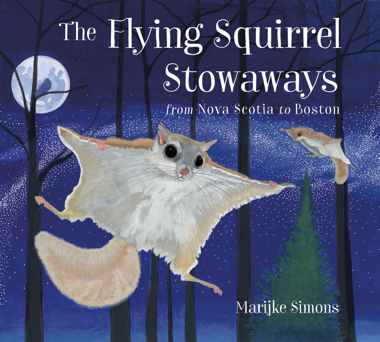 The Flying Squirrel Stowaways: from Nova Scotia to Boston