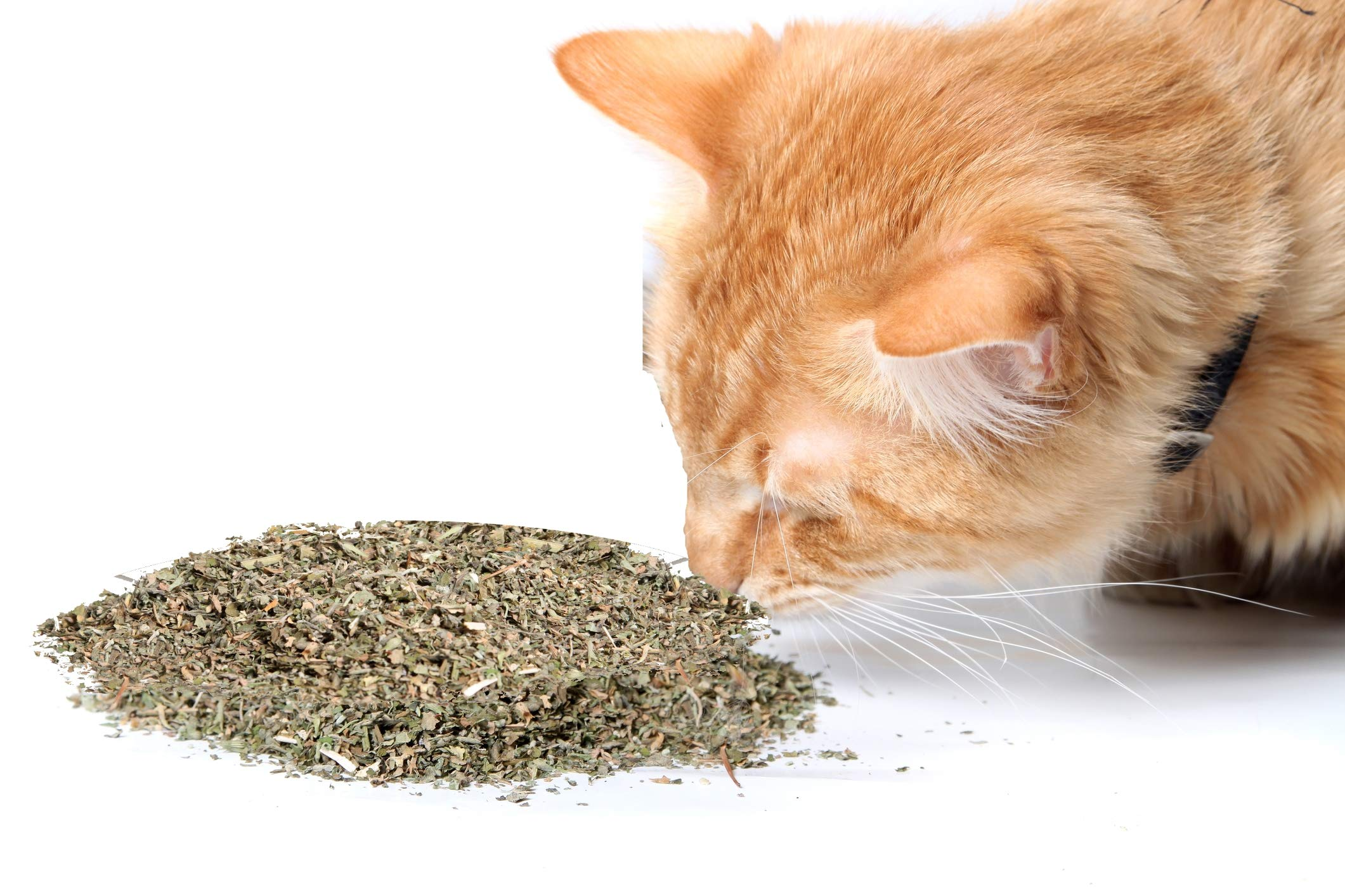 Cat Crack Organic Catnip, Premium Safe Nip Blend, Infused with Maximum Potency Your Kitty Will be Sure to Go Crazy for (10 Cups) by Cat Crack