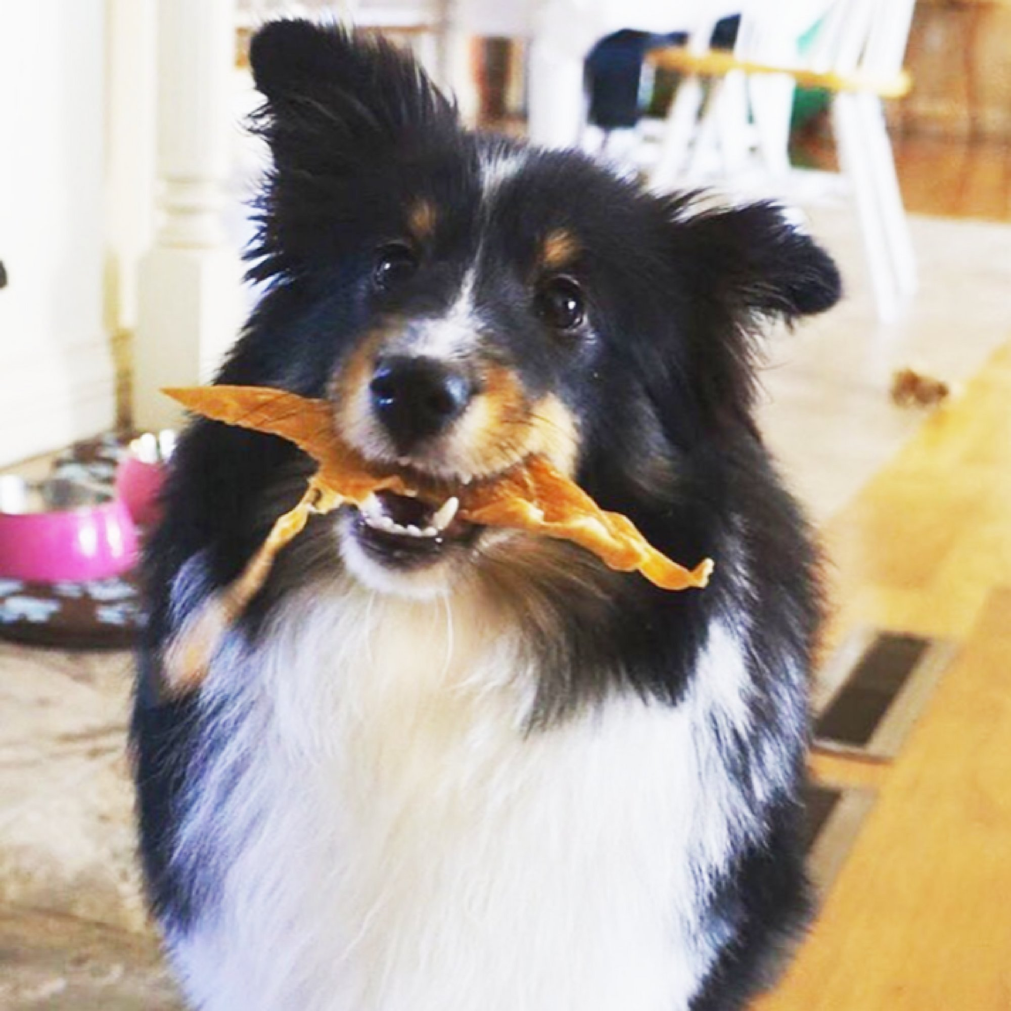 Green Butterfly Brands Chicken Jerky - Dog Treats Made in USA Only - One Ingredient: USDA Grade A Chicken Breast - No Additives or Preservatives - Grain Free, All Natural Premium Strips 8 oz. by Green Butterfly Brands (Image #8)