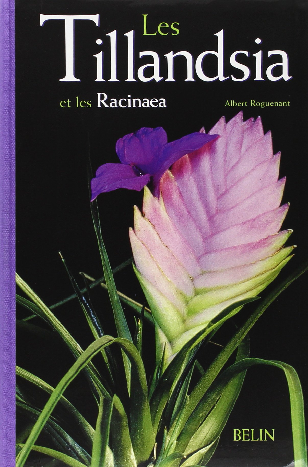 Les Tillandsia et les Racinaea (Botanique)