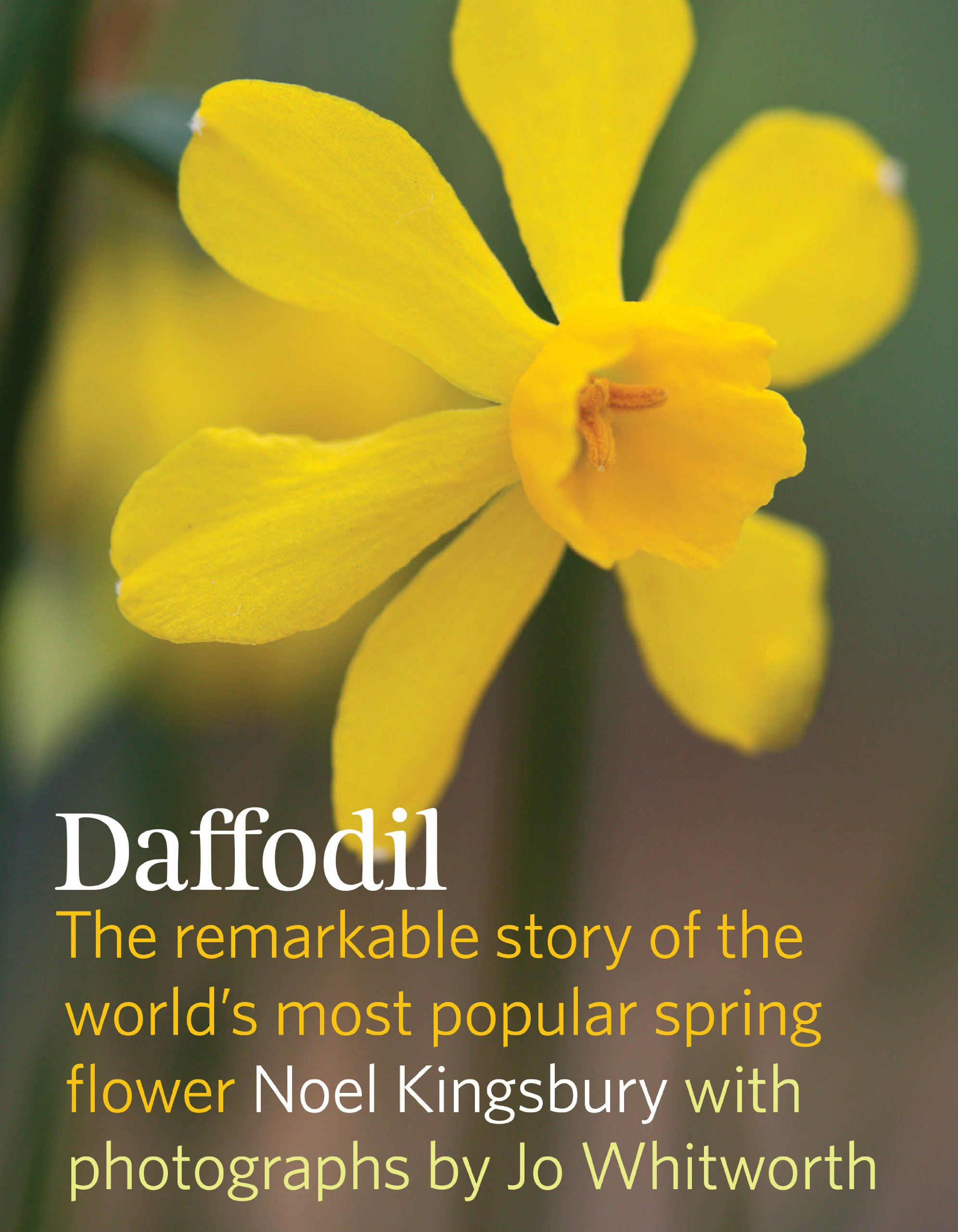 Daffodil The Remarkable Story Of The Worlds Most Popular Spring