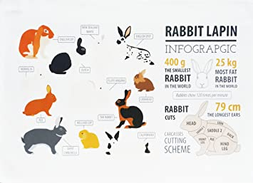 La infografía de conejo algodón toalla de té por la mitad de un burro: Amazon.es: Hogar