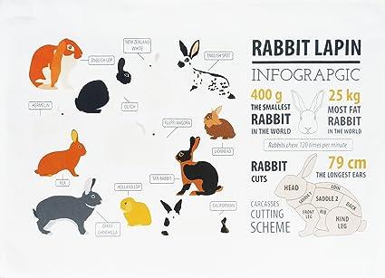 La infografía de conejo algodón toalla de té por la mitad de un burro