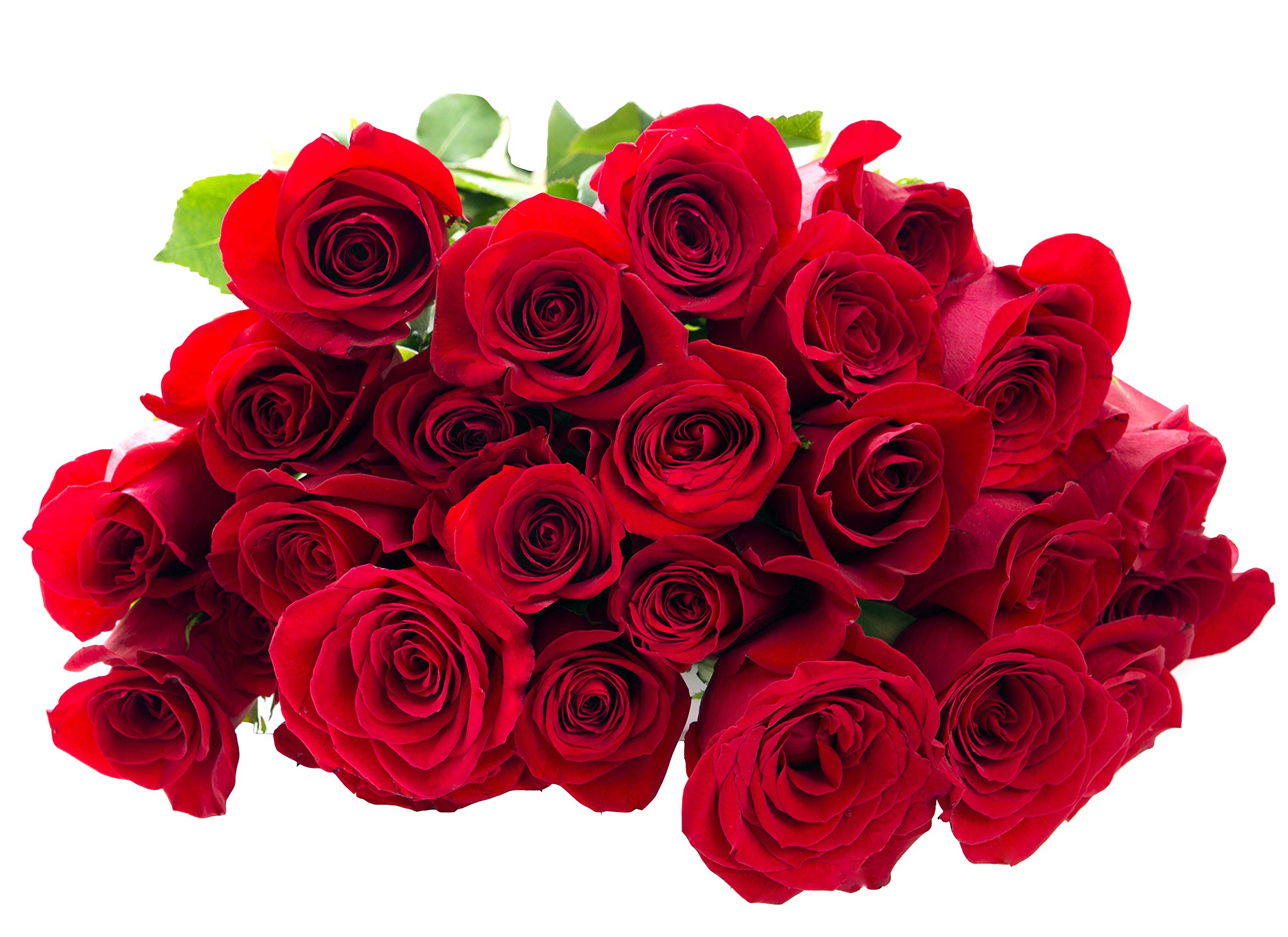 Blooms2Door 25 Red Roses (Farm-Fresh, Long Stem - 50cm) - Farm Direct Wholesale Fresh Flowers