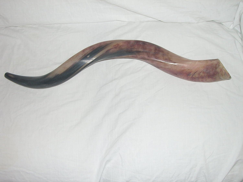 50-59 cm (20-23) Kudu Yemenite HORN SHOFAR Kosher All polished New Kudu shofar kud-0685