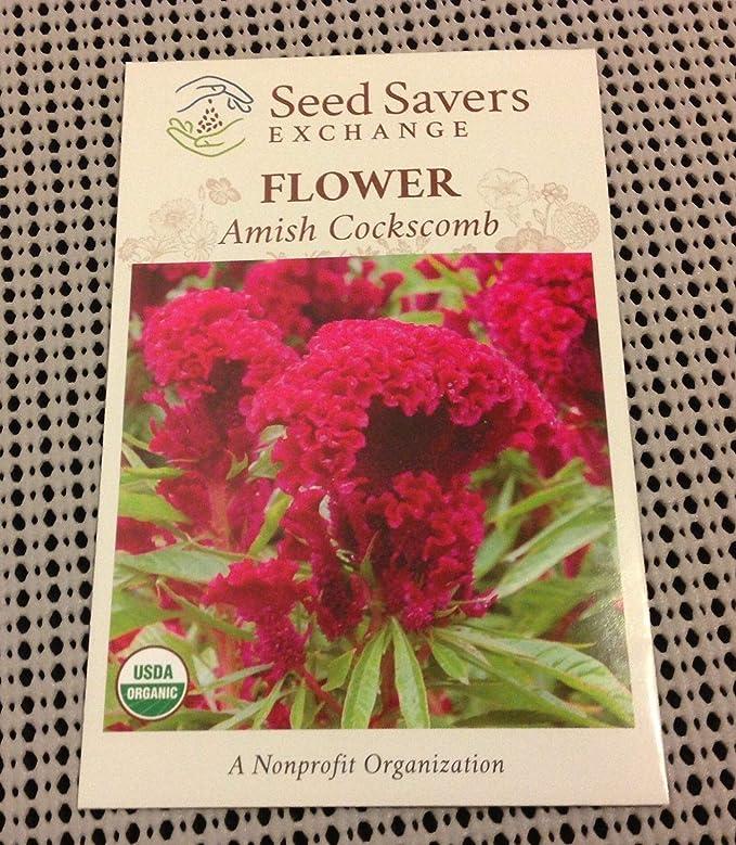 Amazon.com: Casavidas Seeds Package: 20 Pcs/Bag: 20Pcs ...