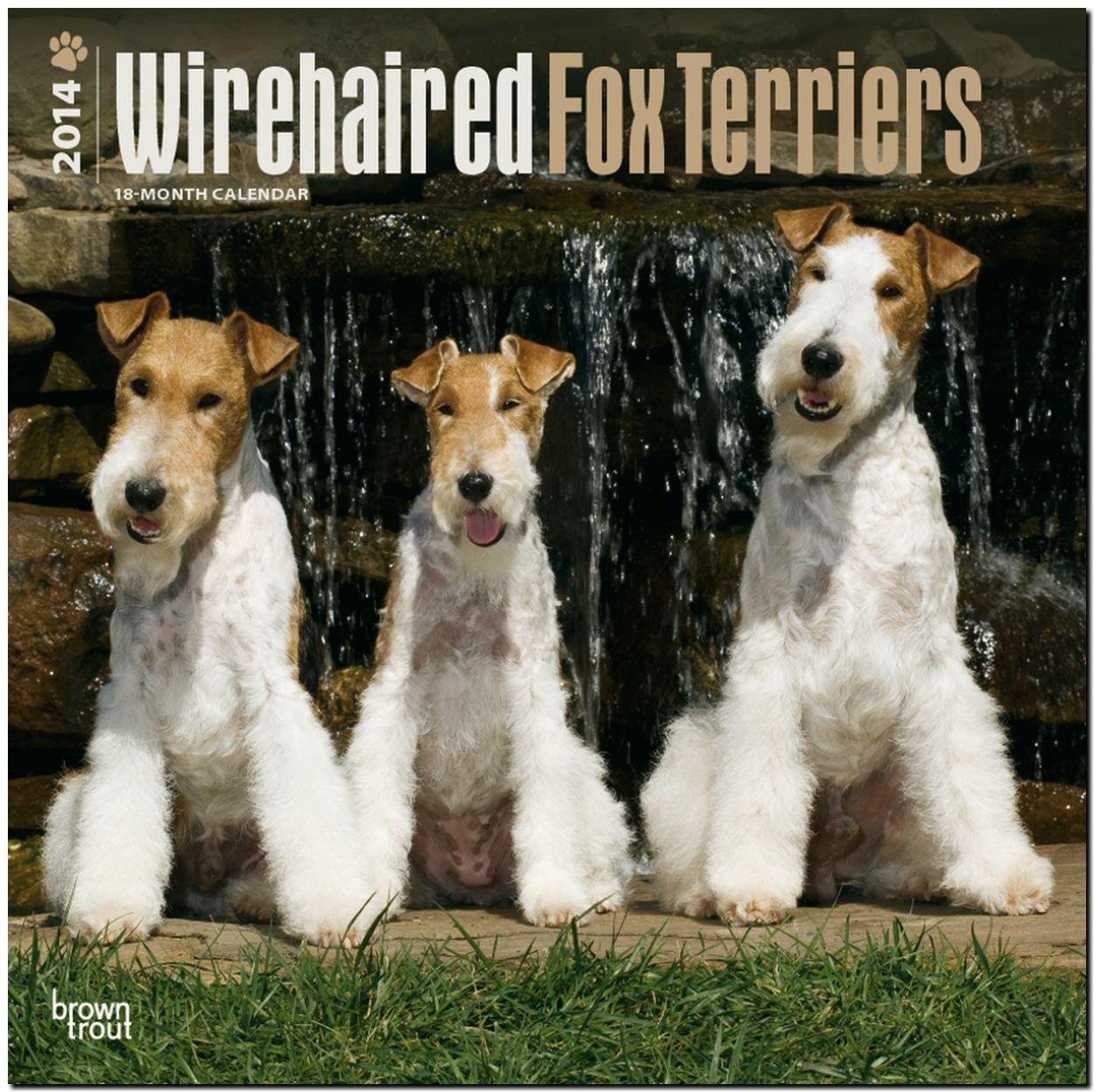 Fox Terriers 2014 - Foxterrier: Original BrownTrout-Kalender [Mehrsprachig] [Kalender]