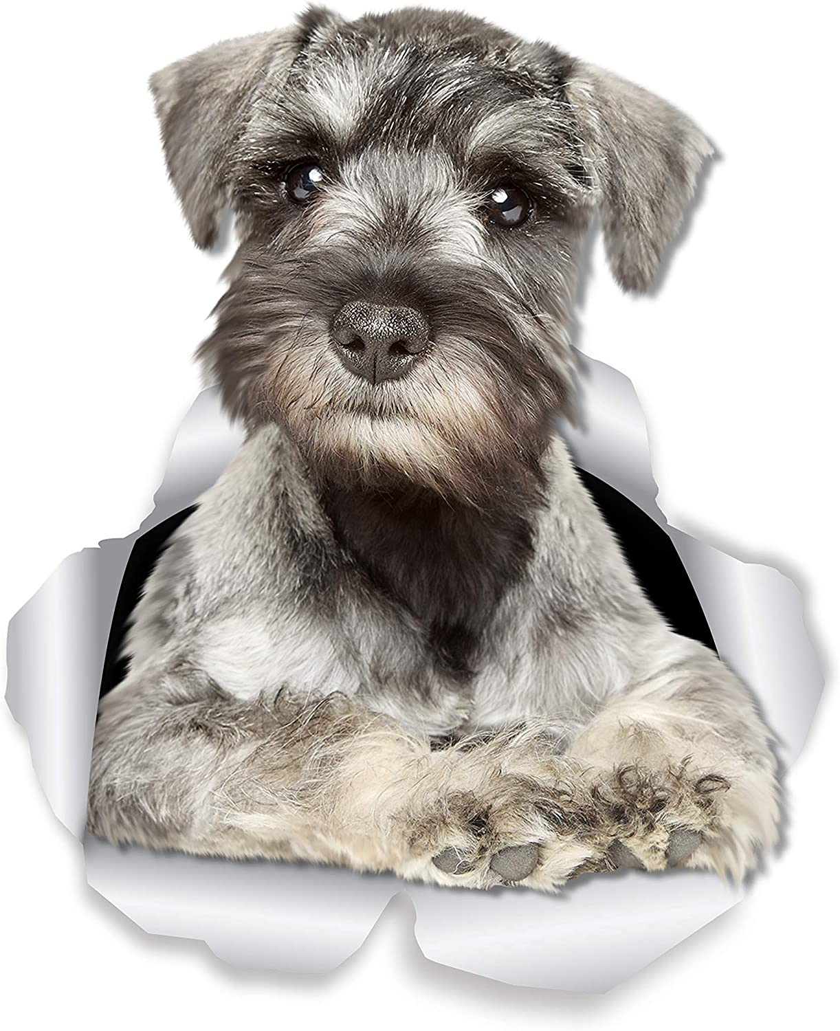 Winston & Bear Curious Schnauzer Dog Wall Decals - 2 Pack - Miniature Schnauzer Dog Toilet Sticker - 3D Dog Car Window and Bumper Sticker - Retail Packaged Dog Lover Gifts