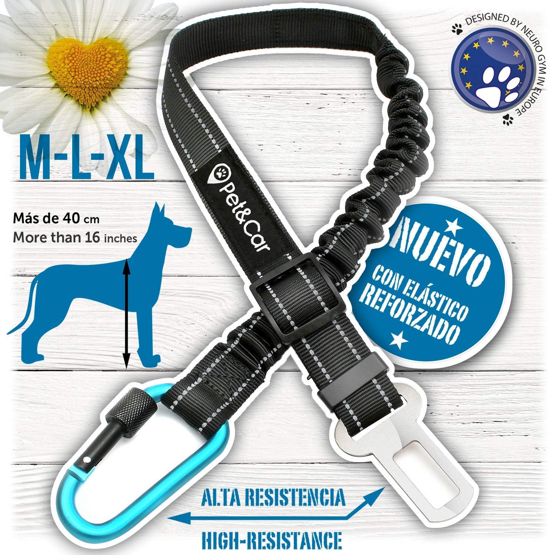 Cinturón de seguridad extensible para arnés de perro. Previene ...
