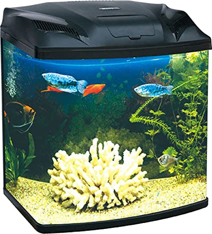 Buy Five Star Black Mini Aquarium Imported Fish Tank Online At Low