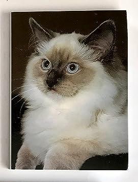 Amante de los gatos regalo - gato ragdoll magnético bloc de notas/lista de la compra, tamaño 75 mm x 100 mm: Amazon.es: Oficina y papelería