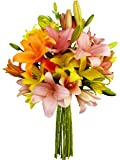 Benchmark Bouquets 12 Stem Assorted Asiatic Lilies, No Vase