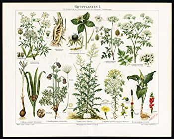 Image: Antique Prints-POISONOUS-PLANTS-FRUIT-Meyers-1897 | Giftplanzen I (Poisonous Plants). This map shows different kinds of poisonous plants, all frutis of the plants enlarged.