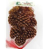 Cinnamon Scented Pinecones 12 Ounce Bulk Bag