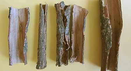 Seemandelbaumrinde-Röhren 100 Gramm original A-Markenware von SMJS-Cambodia - BLITZVERSAND - Seemandellaub Catappa Bark