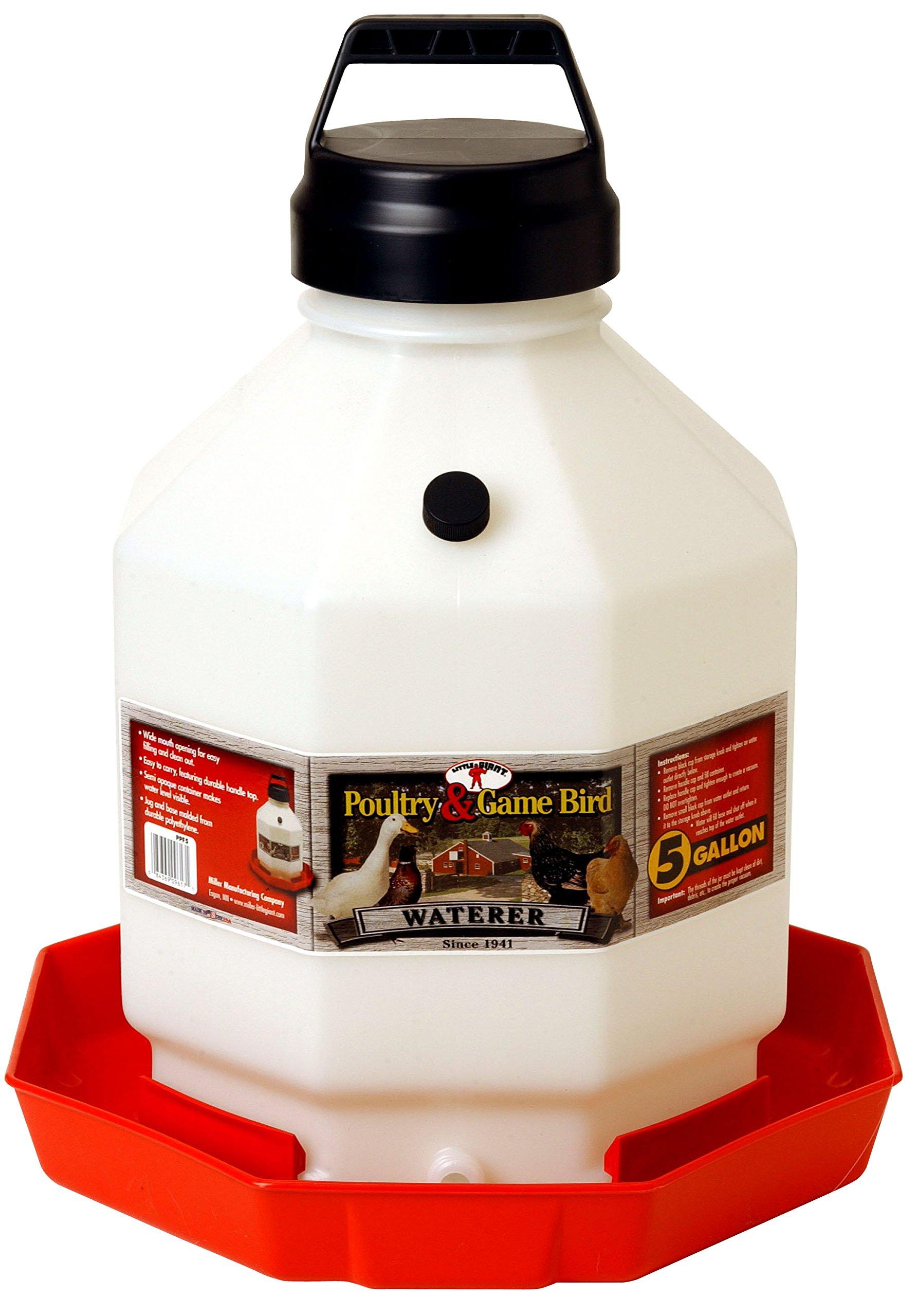 MIller Little Giant 5 Gallon Poultry Waterer Fount - The Best