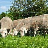 EIDER AGRARnet Schafnetz in 90cm 1 Spitz 50 m lang - Agilitynetz in Top Qualität - Auch für große Hunde als Agilitynetz - Grün