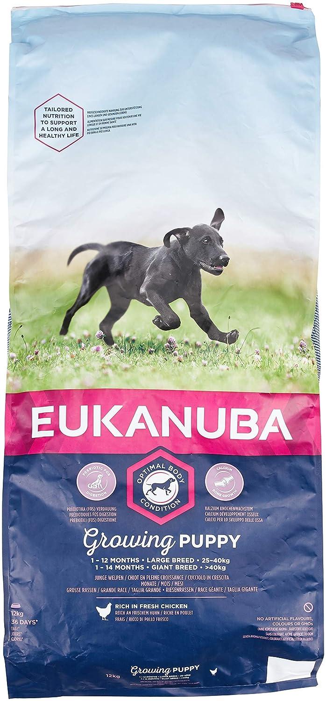 Eukanuba Dog Dry Base Chiot Grandes races sac de poulet - Nourriture pour chiens 1-24 mois- 9000 gr 8710255122489