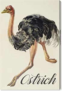 The Oliver Gal Artist Co. Animals Wall Art Canvas Prints for Kids Room 'Ostrich' Childrens Bedroom Décor, 20