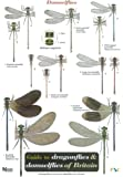 Guide to the Dragonflies and Damselflies of Britain (Occasional Publications)