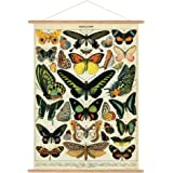 Cavallini Papers & Co. Cavallini Vintage Butterflies Hanging Poster