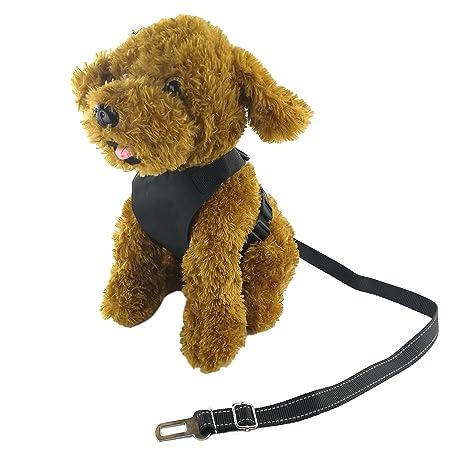 Newtensina El arnés y los cinturones de seguridad del perro del ...