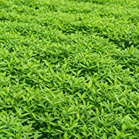 Organic Seeds: 5 lb: Garden Cover Crop Mix Seeds - : Vetch, Winter PEAS, Forage Collards by Farmerly