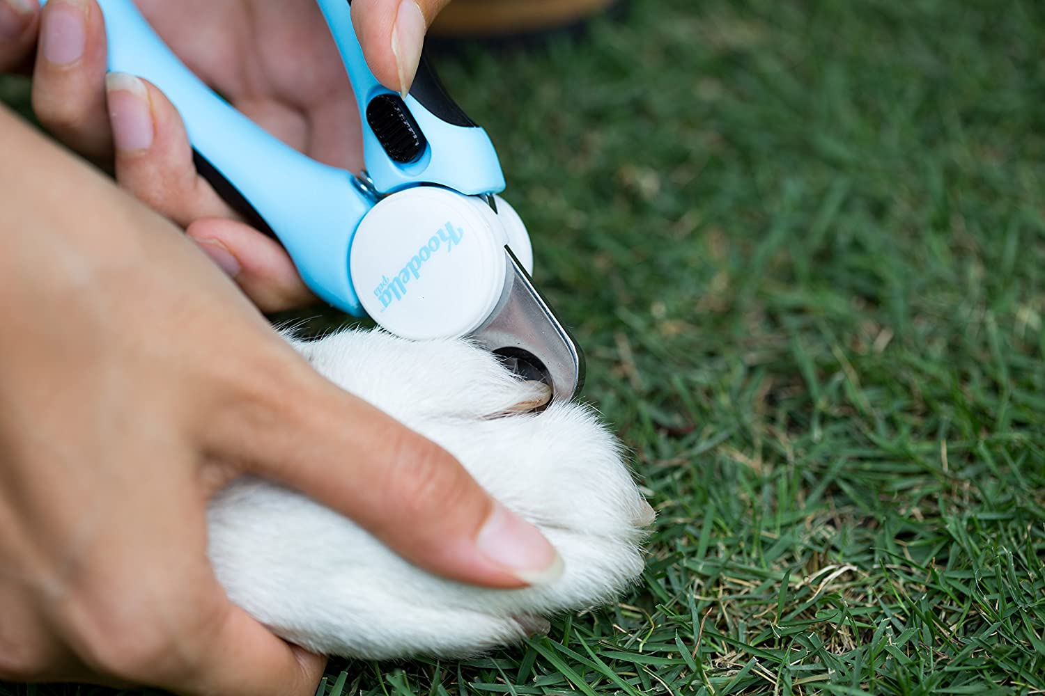 best-dog-nail-clippers