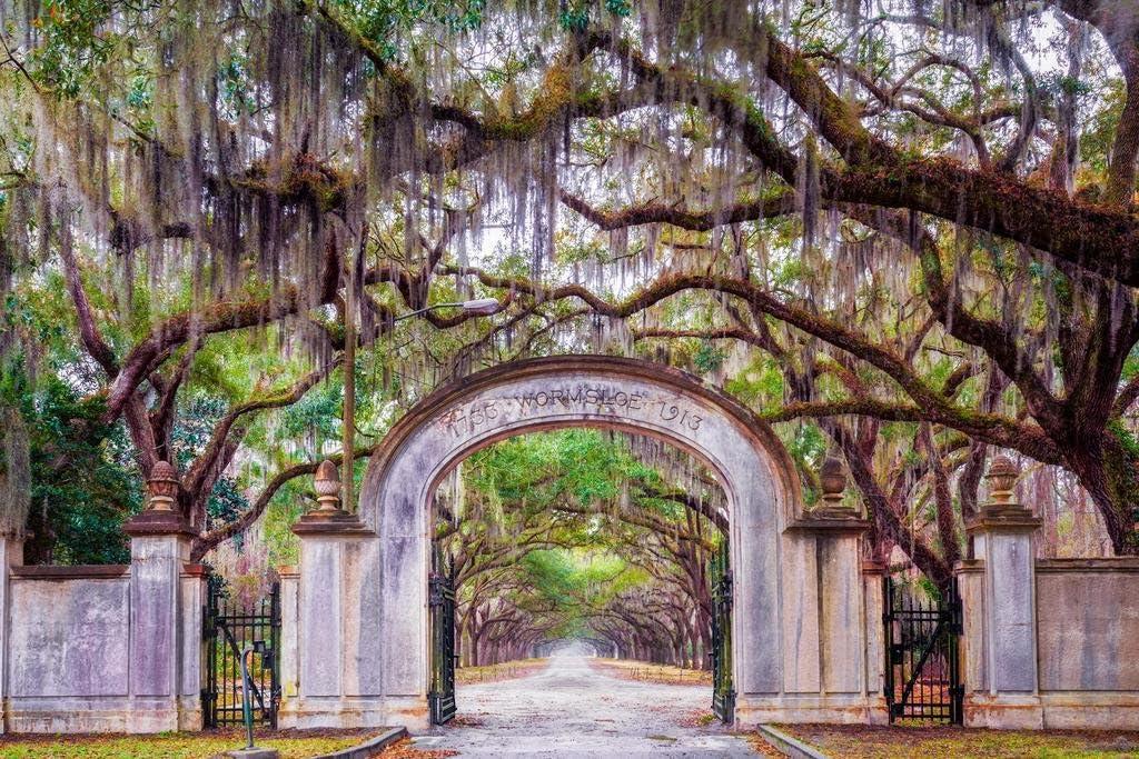 Wormsloe Plantation Savannah Georgia Photo Photograph Cool Wall Decor Art Print Poster 36x24