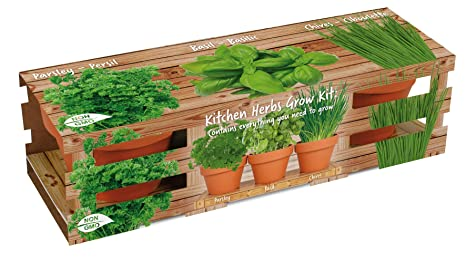 Healthy Kitchen Herb Trio Grow Kit | Grow Basil, Parsley and Chives | Grow  a Herb Garden from Seed in Unique Terra Cotta Pots | GMO Free Herbs |