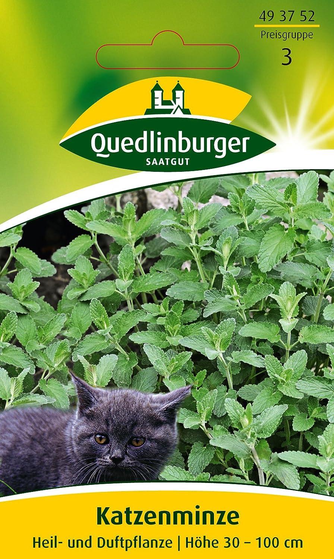 ECHTE KATZENMINZE 300 Samen NEPETA CATARIA Duft WINTERHART Catnip seeds