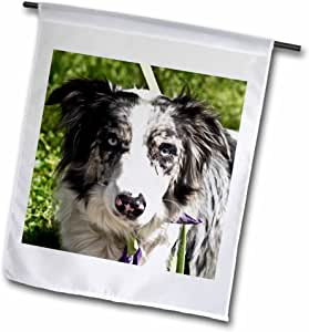 Lee Hiller Photography Pets - Dogs Blue-Merle Border Collie - 18 x 27 inch Garden Flag (fl_49026_2)