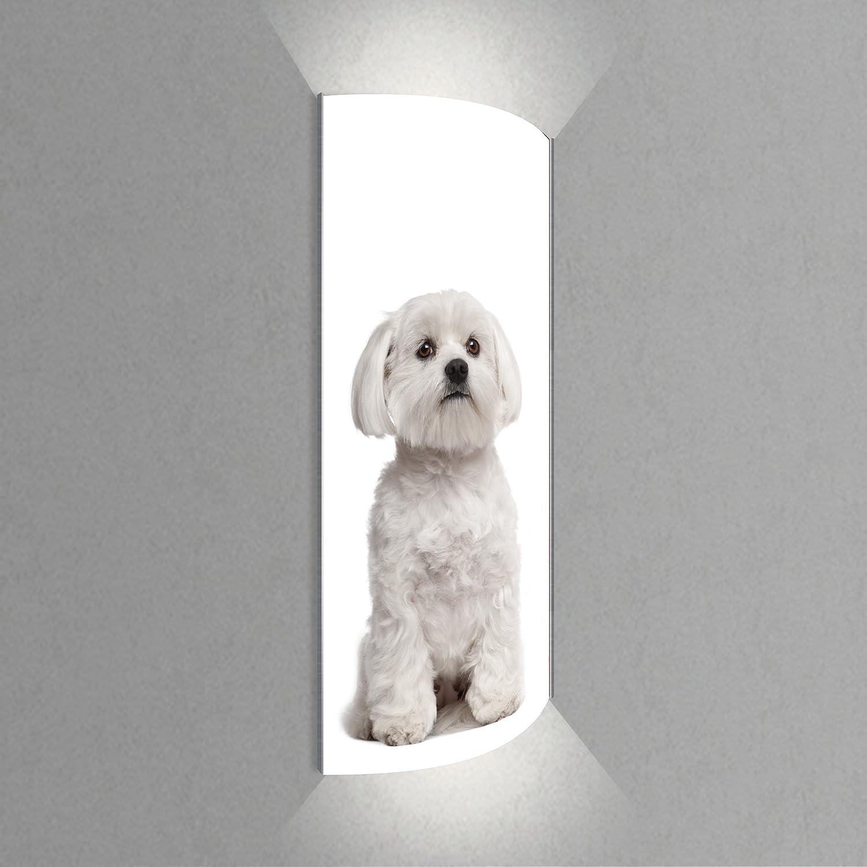 Luminoase-Leuchten - Leuchte Brav - Nachleuchtende hochwertige LED Acrylglas Wandbildlampe, Motiv Tier (570 x 1200 mm)