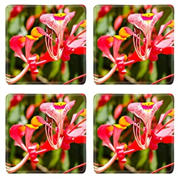 Amazon msd square coasters non slip natural rubber desk msd square coasters non slip natural rubber desk coasters design 26550526 exotic red flower with mightylinksfo