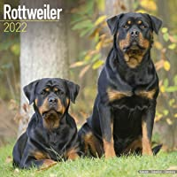 Rottweiler - Rottweiler 2022 - 16-Monatskalender: Original Avonside-Kalender [Mehrsprachig] [Kalender]: Original…