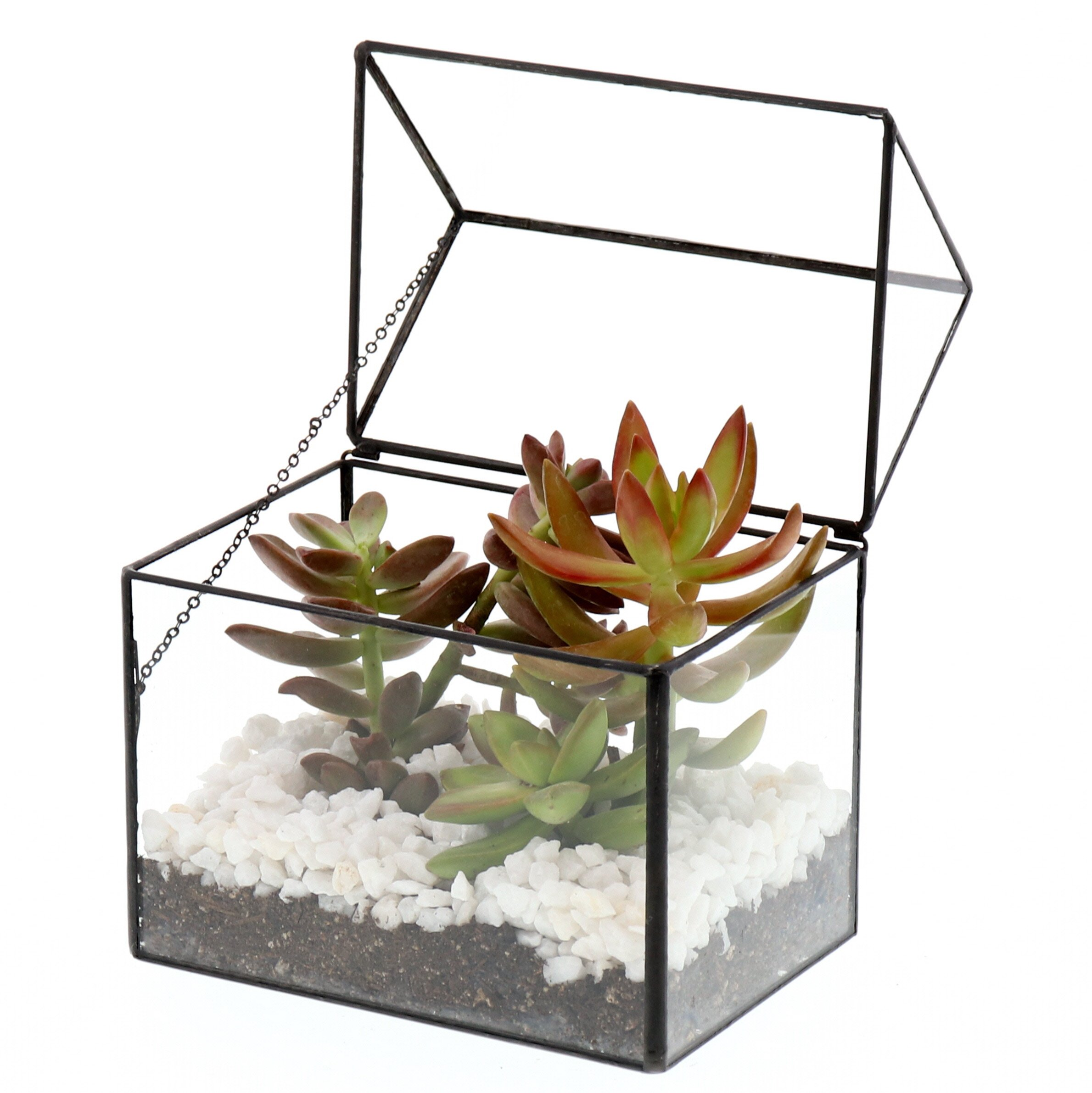 Barnyard Designs Watertight Glass Terrarium House Succulent Plant Container Tabletop Decor 6'' x 6.5'' x 4'' (Black) by Barnyard Designs