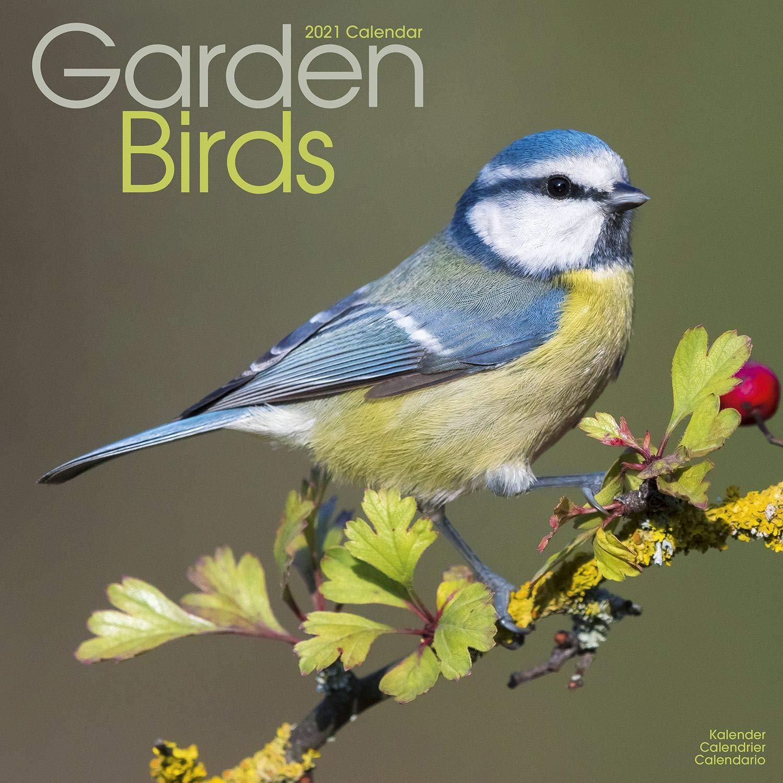 Bird Calendar 2021 Garden Bird Calendar   Calendars 2020   2021 Wall Calendars