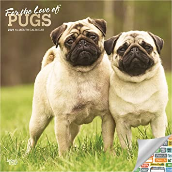 Amazon.: Pug Calendar 2021 Bundle   Deluxe 2021 Pugs Wall