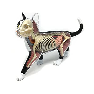 4D Vision Cat Anatomy Model: Home & Kitchen