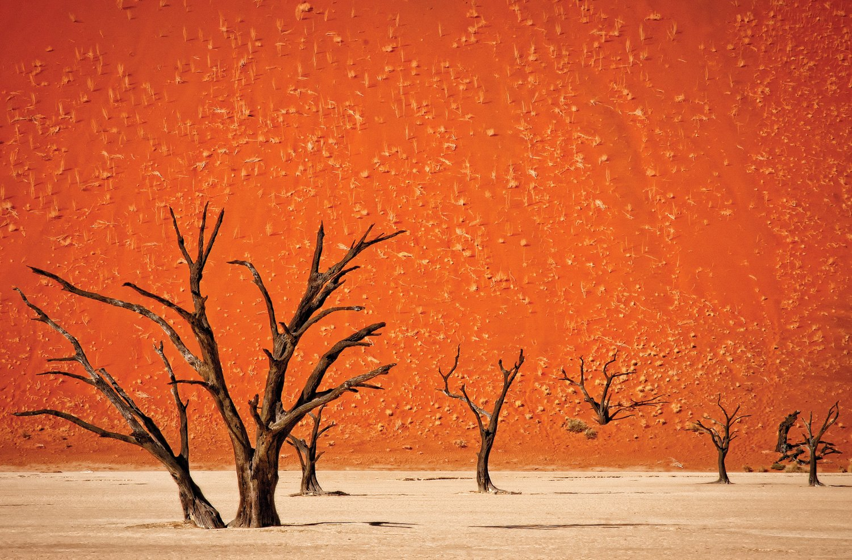 JP London Heavyweight Non Woven Art JPL and Mathilde Guillemot Present The Older Surreal Dali Desert Africa 36in x 24in Prepasted Fully Removable Wall Poster Mural SPMURLT1X40789